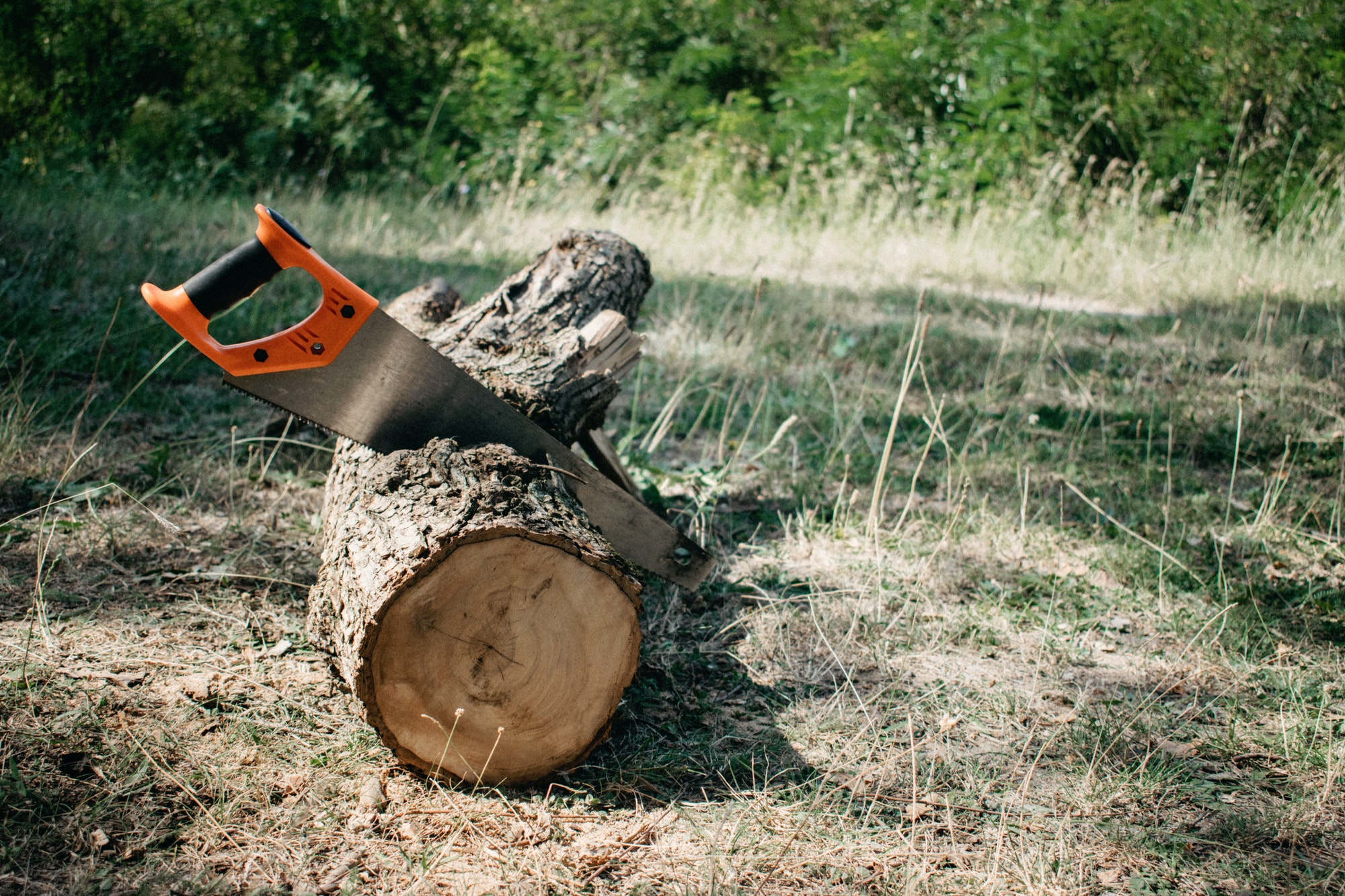 Saw in a log outdoor. Sawing wood for campfire in the forest. Cutting log of wood timber to making